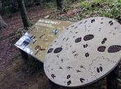 parcours faune locale Parc zoologique Mulhouse