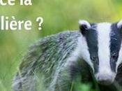 conseils pour faire photos animalières cartonnent