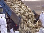 H5N1: Mieux pire qu'avant