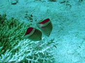 transition douce élégante vers poissons tropicaux