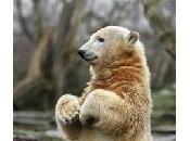 film Knut