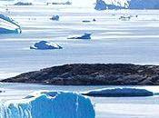artistes Disko contre réchauffement planète...