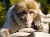 chien désigné comme garde corps d'un bébé singe photos)