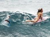 requins reviennent sont