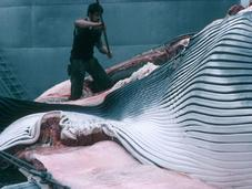 Greenpeace condamne décision islandaise d'augmenter fortement quotas chasse baleinière