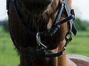 L'extérieur: cheval peut cacher autre syndrome docteur Jekyll mister Hyde