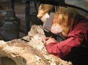 gisement fossile dernière glaciaire découvert sous parking Angeles, découvrez images