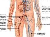 Ultim Pack d'Anatomie