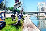 crocodile dans fleuve midi