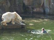 femme blessée ours polaires Berlin
