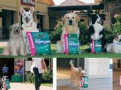 jour Dressez chiens pour faire votre [Nourriture Chiens]