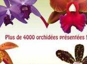 Exposition d'orchidées Saint-Leu-la-Forêt