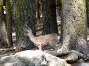 Pique-nique dans parc Yosemite