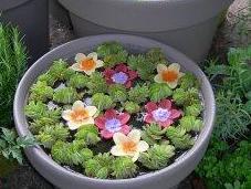 Minis bassins plantés fleuris