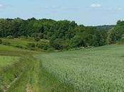 Chemin Pontois