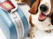 passeport européen pour animaux compagnie