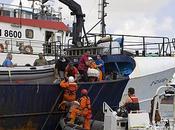 Thon rouge militants Greenpeace violemment attaqués dans port Valette, Malte