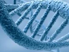 Schizophrénie risques souvent liés variations génétiques