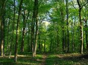 L'écolo bois pour usage plus responsable forêts