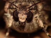 Papillons soir moths