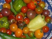 tomates Joël Thiébault... encore vacances!