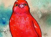 Oiseaux Amarante Sénégal