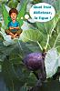 site Ecolokid pour sensibiliser enfants l'écologie