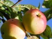 Fête pomme, cidre fromage Evreux
