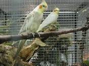 Pays Morlaix. exposition d'oiseaux Langolvas