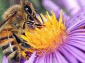 Danger pour abeilles nous