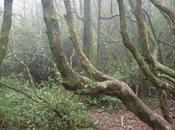 Jour toujours: Parque National Bosque Fray Jorge