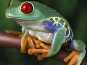 L'économie Martiniquaise syndrome grenouille
