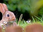 Saveurs d'automne: lapin girolles grises