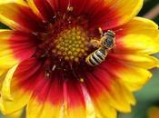 fleurs jardin l'abeille butineuse
