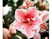 Connaissez-vous langage fleurs?