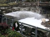 Noël blanc pour ours polaires