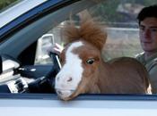 mini poney nommé Koda photos)