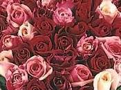 J'ai demandé hommes Etant célibataires, qu'avez-vous prévu pour Saint Valentin