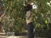 Skittles/ L'arbre humain.