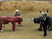 Bullfighting combats taureaux Okinawa