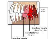 Décodage dentaire symbolique Dents, temple l'âme réédité