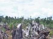 Bataille d'ONG dans l'huile palme. Bingo