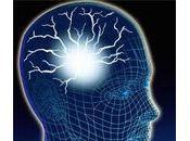 cerveau (II)