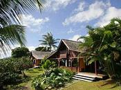 Voyage Guadeloupe Jardin Malanga