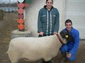 moutons sont dans canards