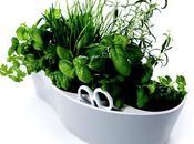 Tout pour plantes aromatiques