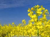 Biocarburants 1ère génération bilan carbone très vert l'ADEME