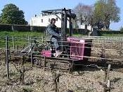 petit chenillard dans vignes Mirebeau