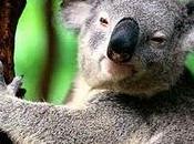 Tapis Volant Koala, Frag, Scarabés Cathédrale