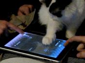 Inclassable Ipad Chat Buzz [vidéo]